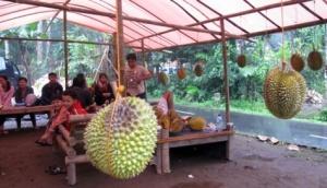 Sejumlah pengunjung  menikmati buah durian di Kampung Durian, Magelang, Jawa Tengah.