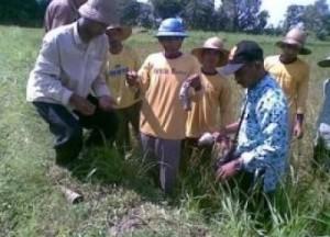 Petani secara swadaya melakukan pembasmian hama tikus