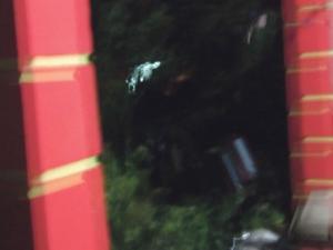 Objek putih yang dikatakan menyerupai orang rukuk dalam solat dilihat di dahan pokok