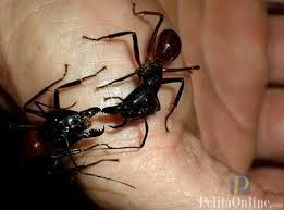 Hati- hati bila digigit semut