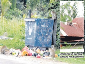 Sekumpulan monyet menyelongkar tong sampah yang dipenuhi sampah sarap.