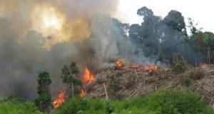 Rokan Hilir merupakan kawasan terbanyak terjadi KEBAKARAN hutan.